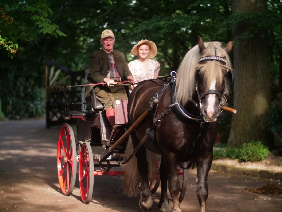 arooga Senioren - Kutsche mit Schwarzwaelder Hengst und Senior